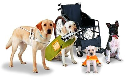 How to Prevent Service Animal Fraud